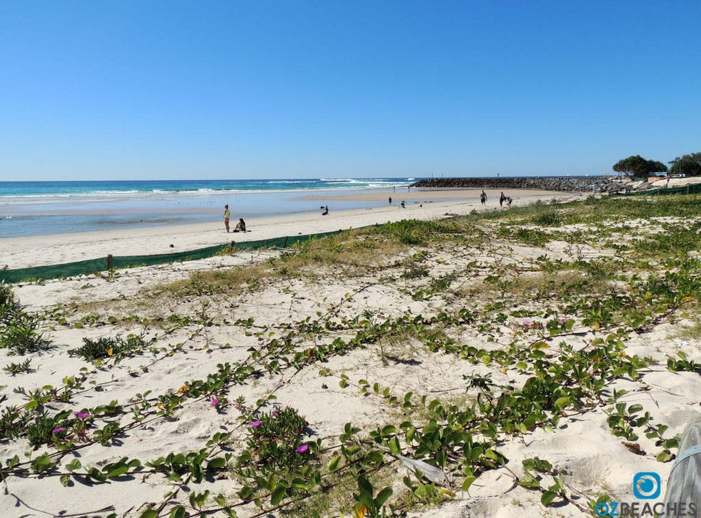 Dune regenration program at Kingscliff beach