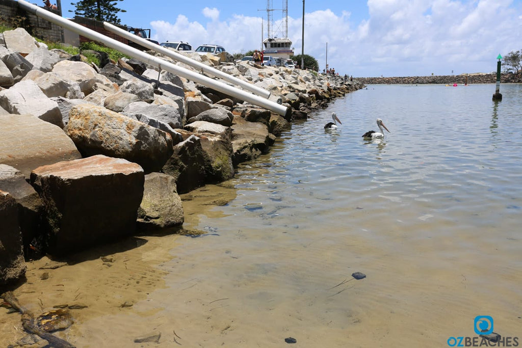 Pelicans waiting to be fed at Kingscliff rivermouth