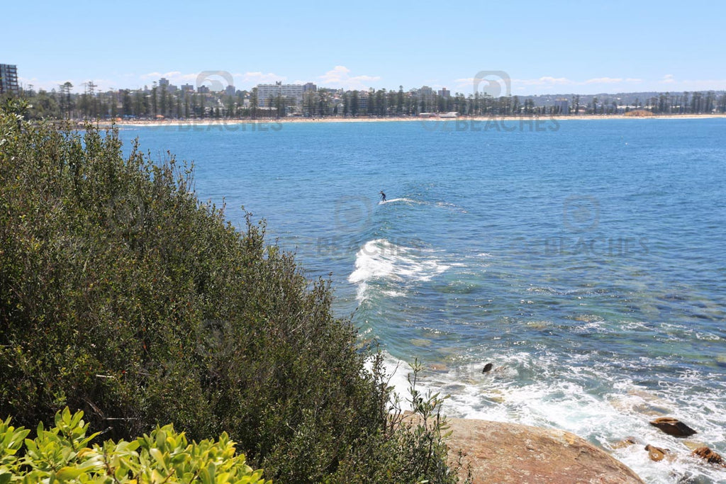 A paddleboarder riding the swell at Fairy Bower