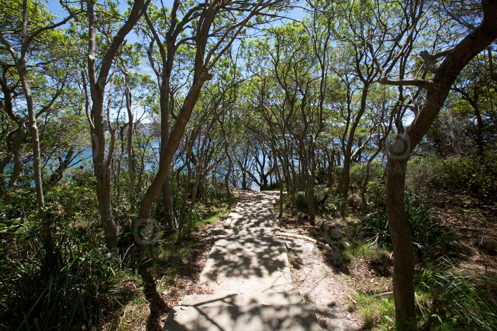 Scenic coastal walk at Shelly Beach headland