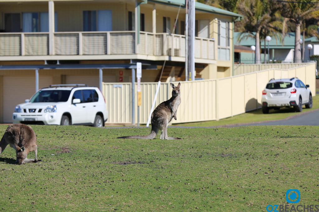 Plenty of friendly locals at Merry Beach