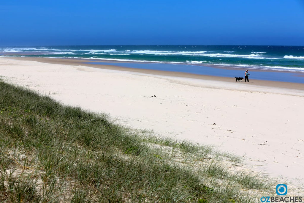Salt Beach NSW is an off leash approved and popular for dog walking
