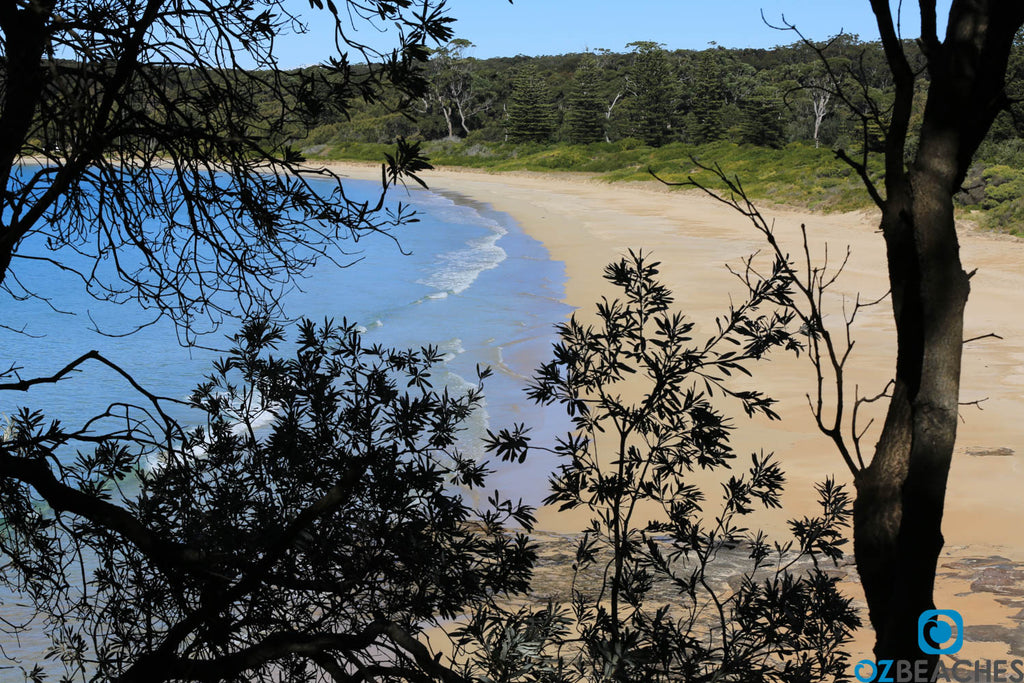 Looking through the trees at Durras Beach NSW