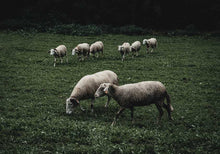 Load image into Gallery viewer, Sheeps II
