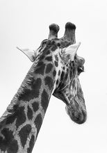 Load image into Gallery viewer, Giraffe I