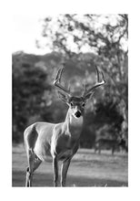 Load image into Gallery viewer, Deer II