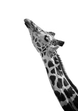Load image into Gallery viewer, Giraffe II