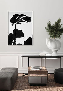 Black Monstera II