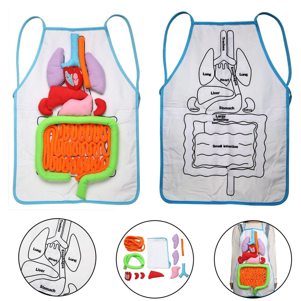 3D Anatomy Apron Human Body Organs - Educational Learning Toy