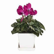 Load image into Gallery viewer, Cyclamen Floral Arrangement in Planter #329HW