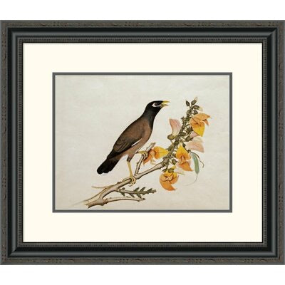 A Minah Bird Perched on a Flowering Branch Framed Painting - #17CE