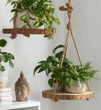 Load image into Gallery viewer, Louane Round Hanging Wood Slice Hanging Planter 2 In Box #46HW