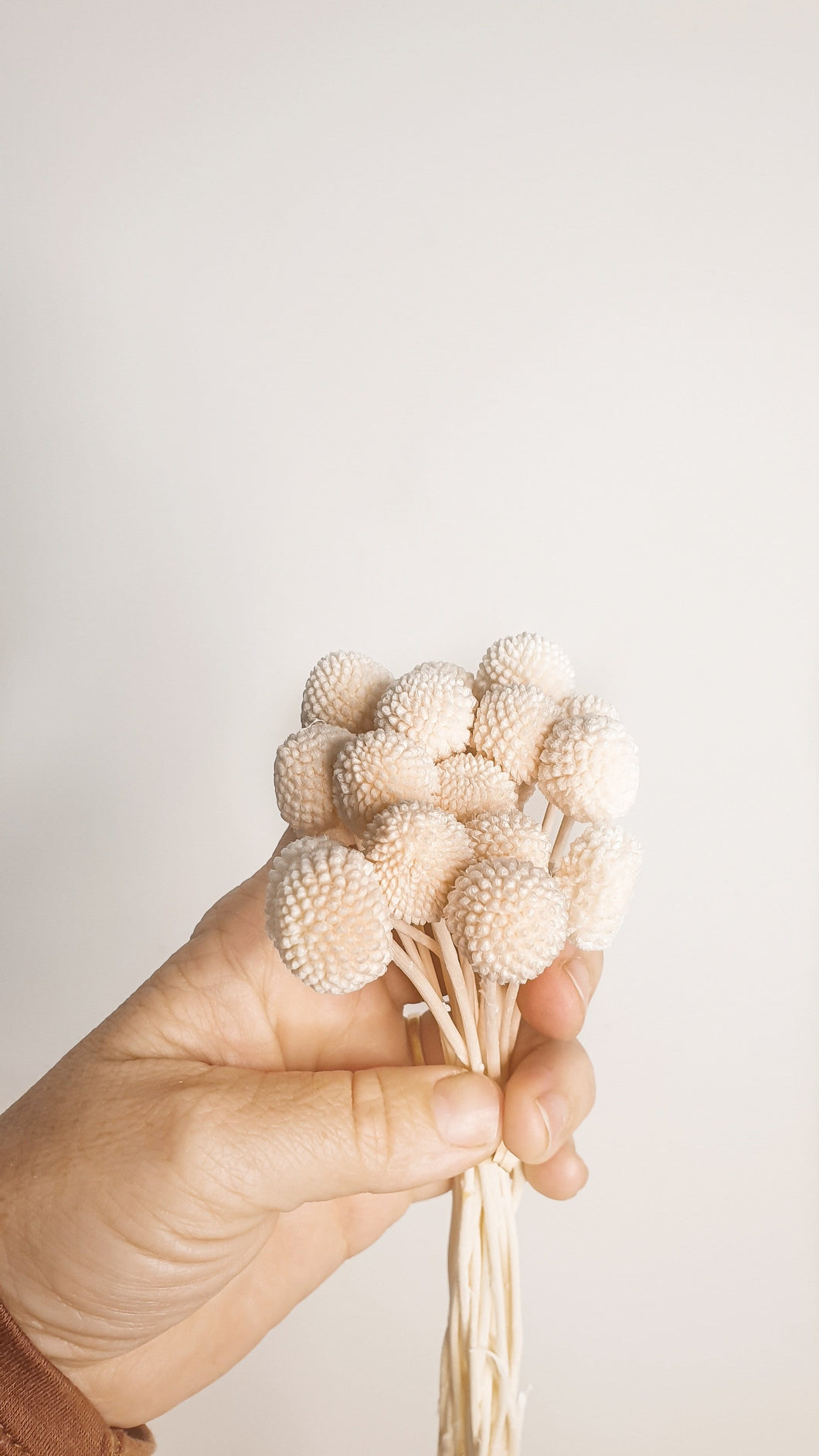 BILLY BUTTONS WHITE-CREAM