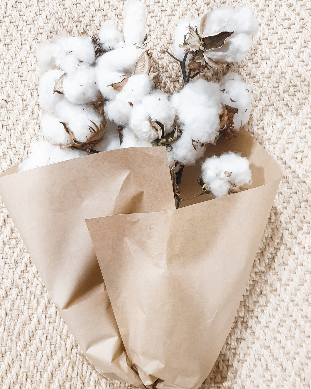 NATURAL DRIED COTTON - LARGE BUNCH OF 5 STEMS