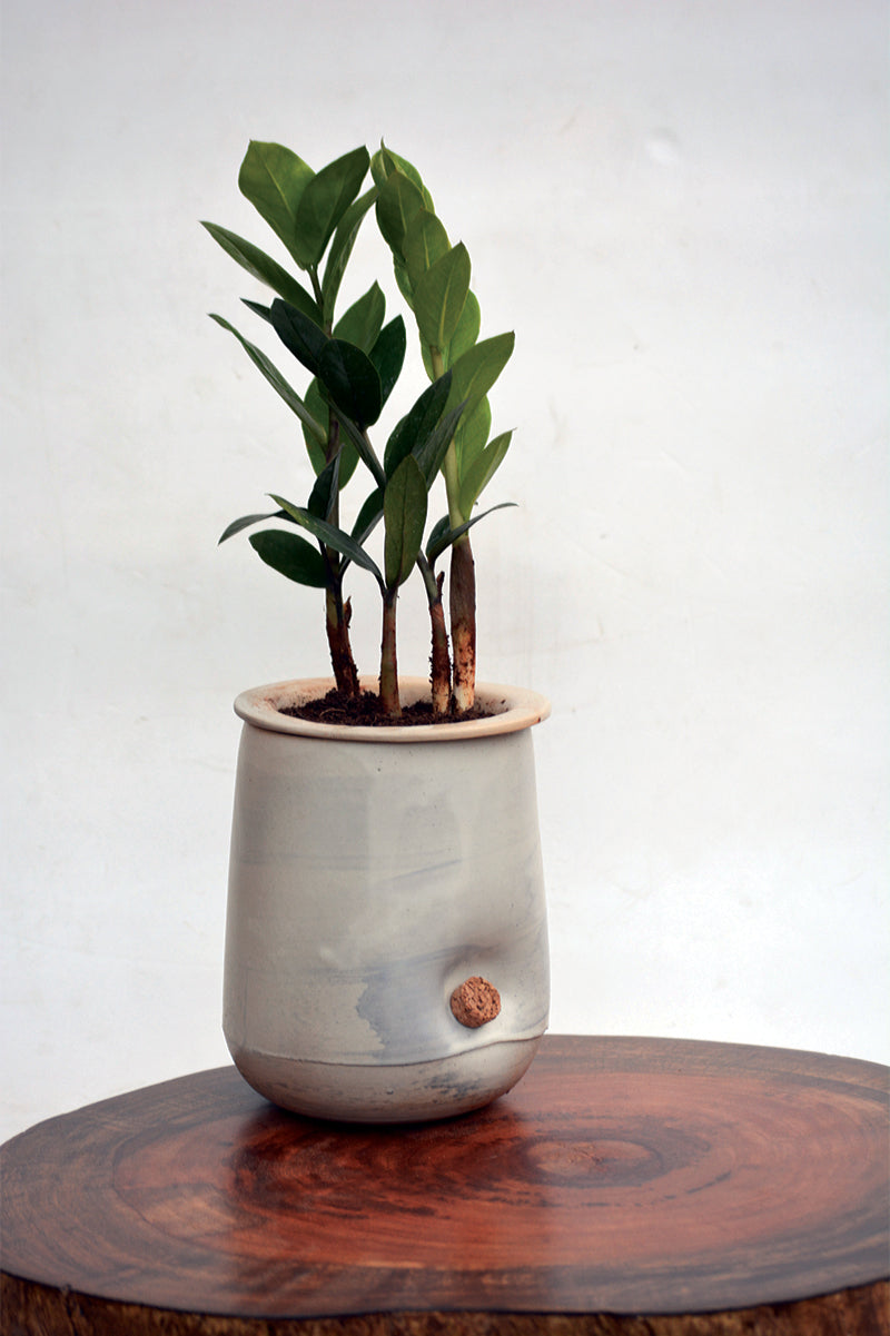 Ensō - the self watering planter