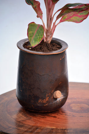 Open image in slideshow, Ensō - the self watering planter