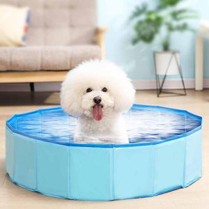 SwimPaw Outdoor Pool- Collapsible Swimming Pool for Pets & Kids