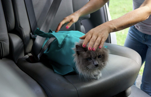 Buy 2 Get 10% Off & Free Shipping - Cat Carrier Pouch