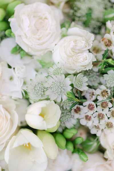 White and Cream Roses