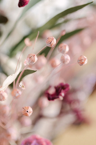 Dried Pink Flowers