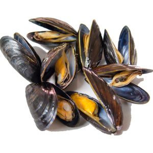 COOKED & FROZEN BLUE SHELL MUSSELS 1kg