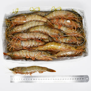 KING  BANANA PRAWNS (B2) - 2kg