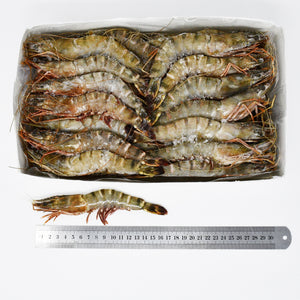 KING TIGER PRAWNS (T2 ) - 2kg