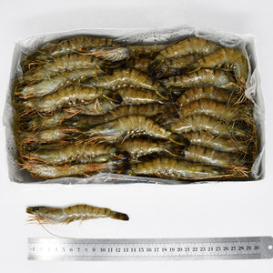 QUEEN TIGER PRAWNS (T4) - 2kg