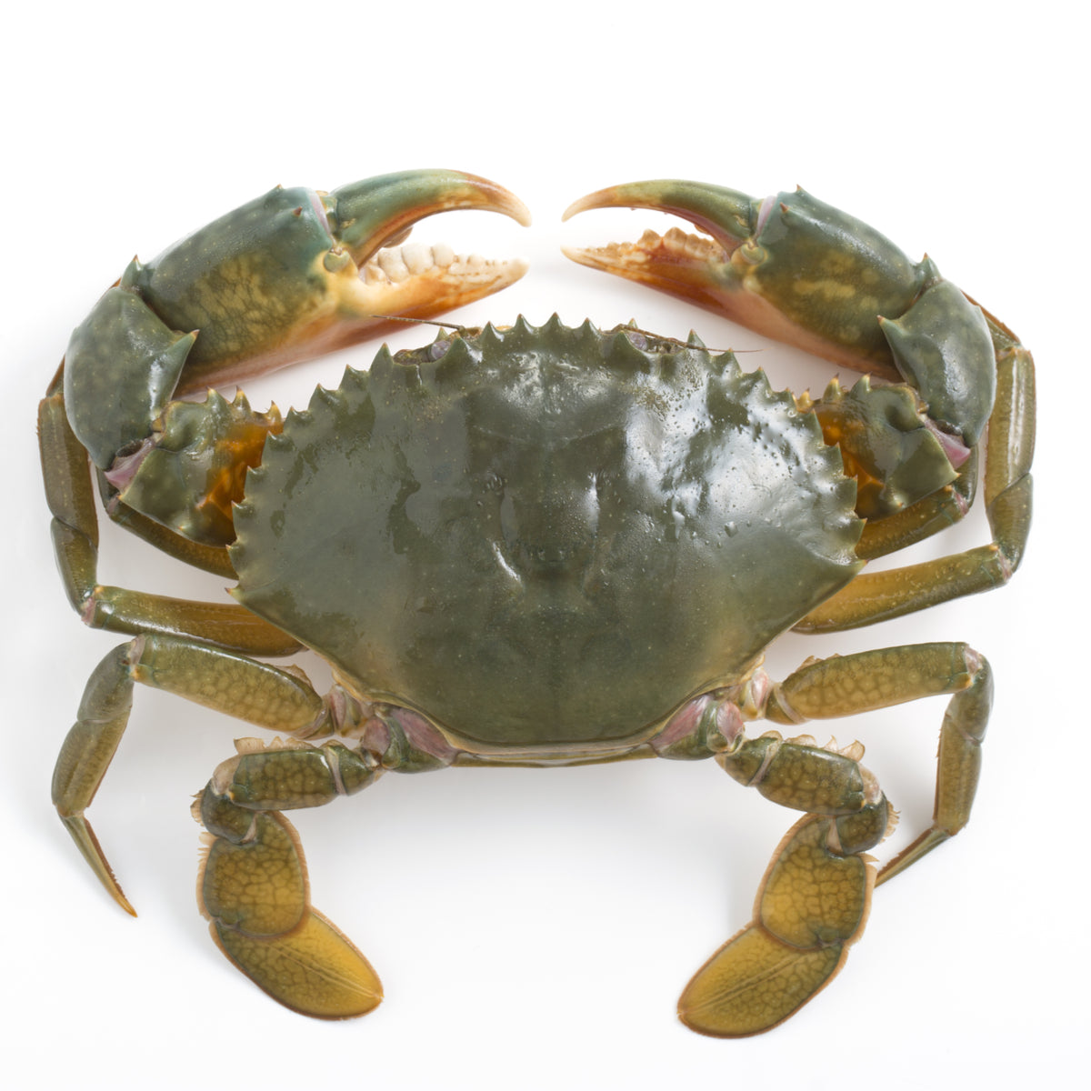CLEANED WHOLE FROZEN LAMU CRABS (450-550g per piece)