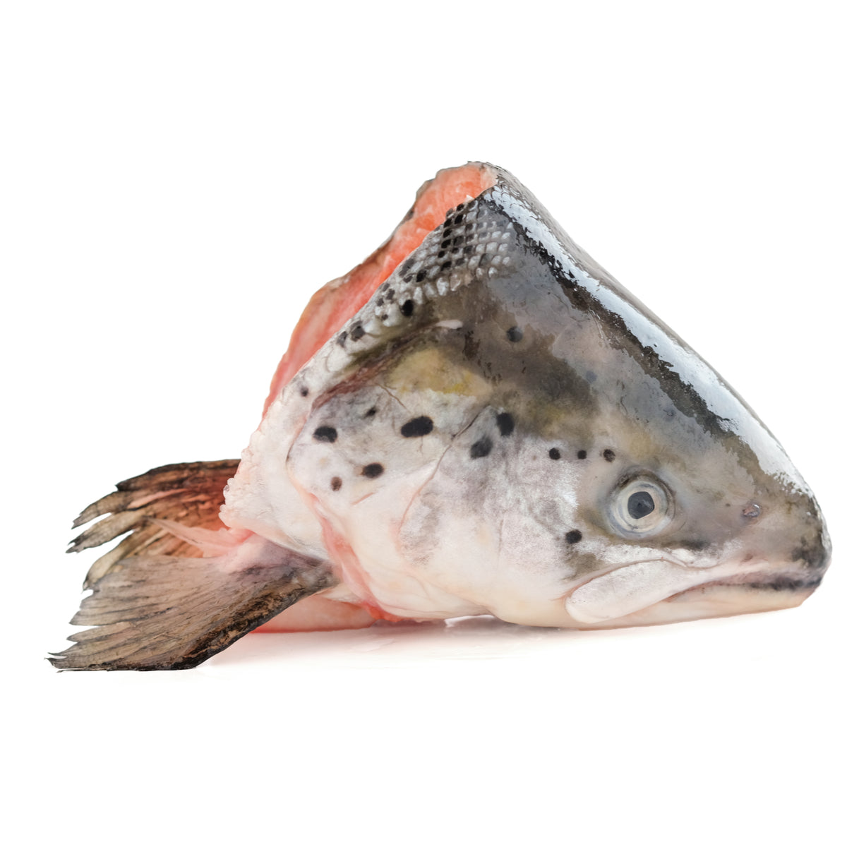FROZEN SALMON HEAD (Good for fish stock)