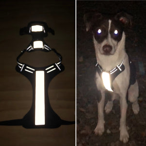 Reflective Iron-On Material - Dog Safety - for Harnesses, Leashes, Collars, and More