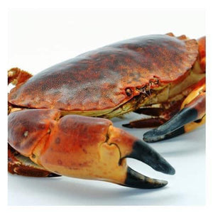 Locally Landed Fresh Crab