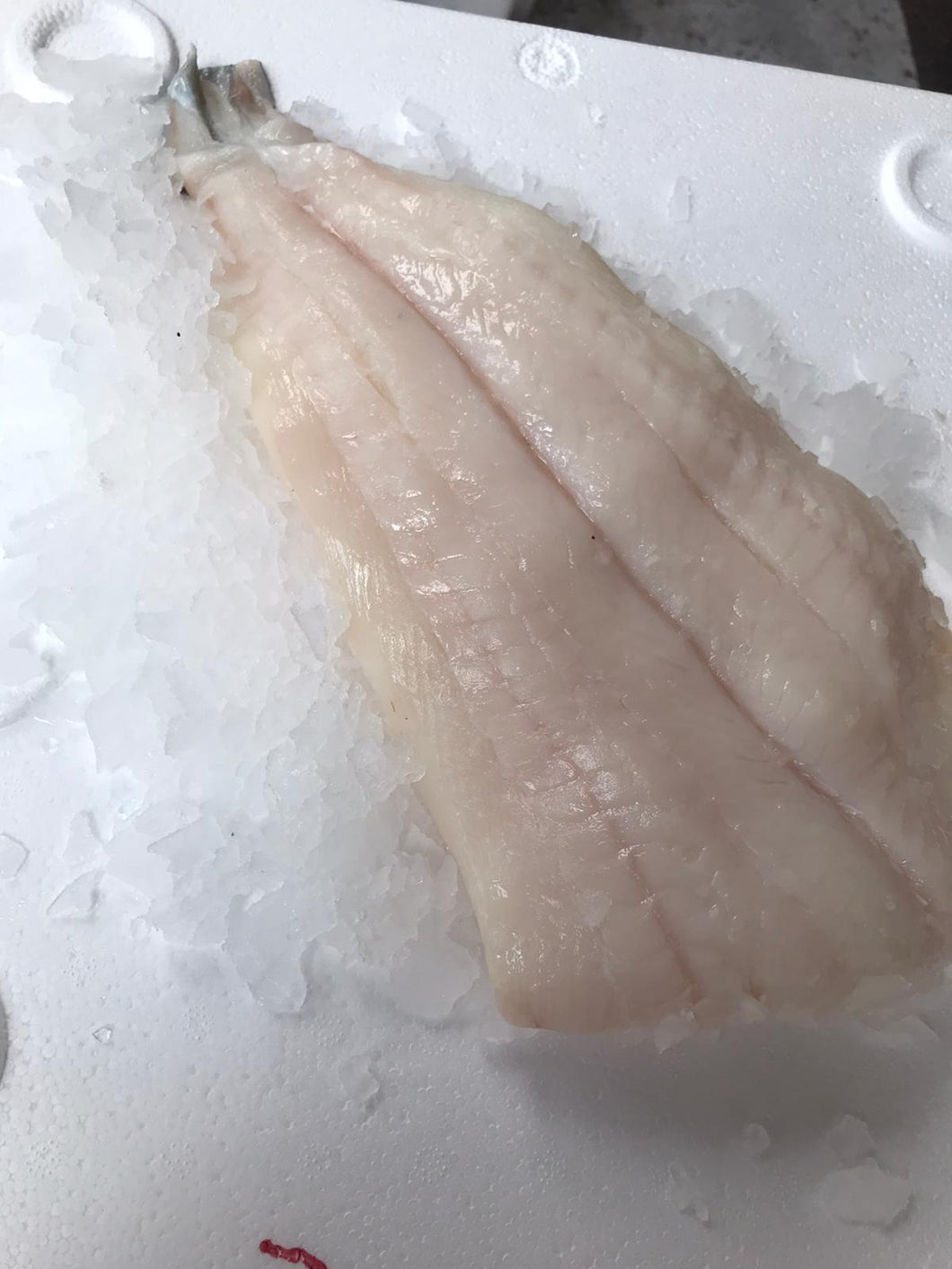 Halibut Fillets 1kg