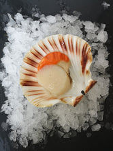 Load image into Gallery viewer, 1 Bag of Scallops