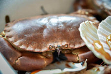 Load image into Gallery viewer, Locally Landed Fresh Crab
