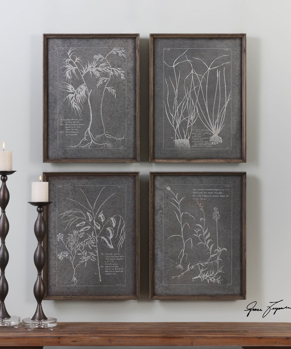 "24""H x 18""W Root Study Print Art Set of 4"