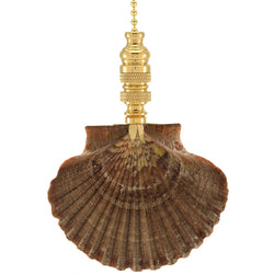 Mexican Flat Sea Shell Fan Pull