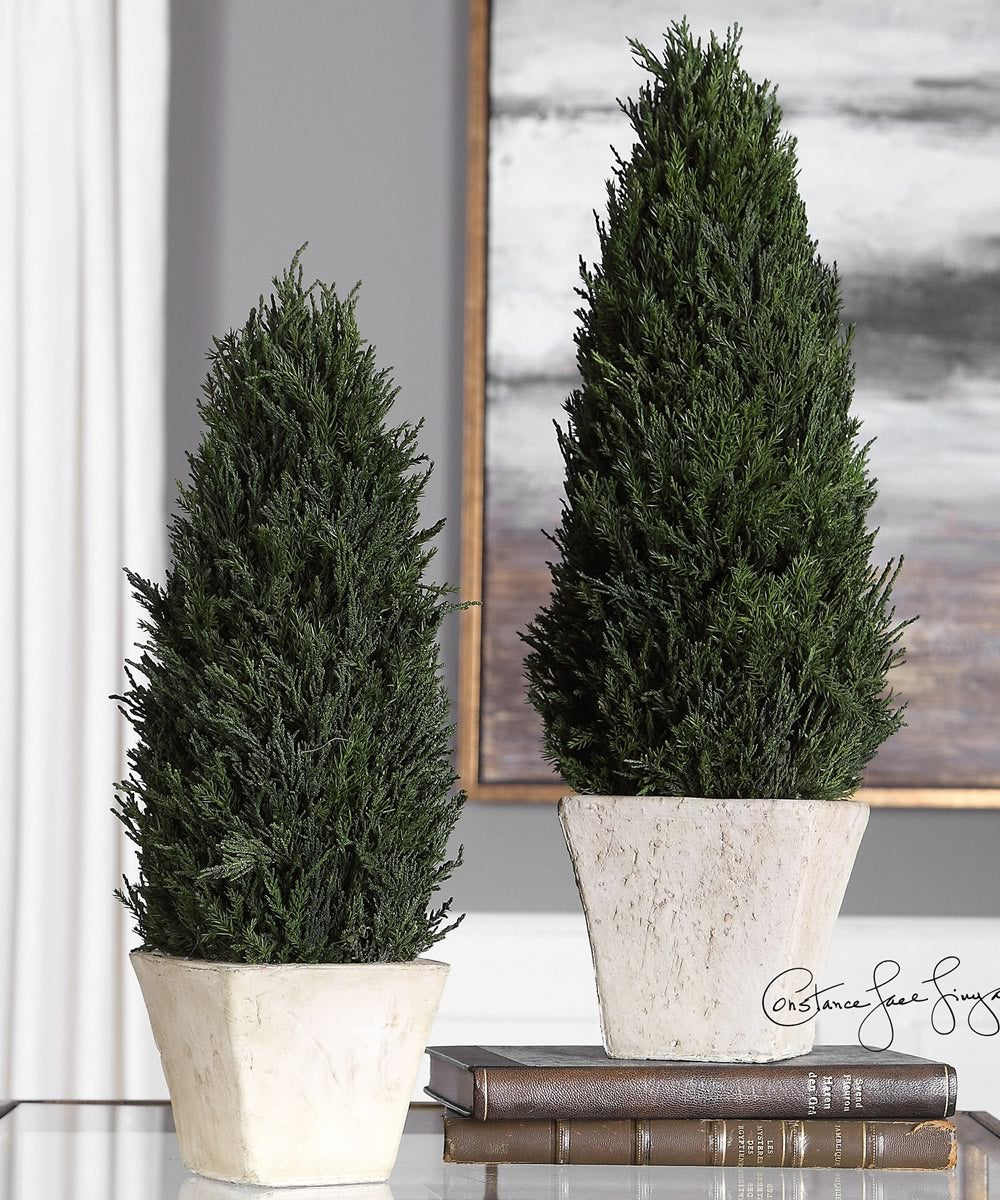 Cypress Cone Topiaries, Set of 2