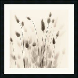 Amanti Art Alan Blaustein Italian Tall Grass No. 1 Framed Print AA114185