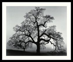 Amanti Art Ansel Adams Oak Tree Sunset City California 1962 Framed Print AA01382