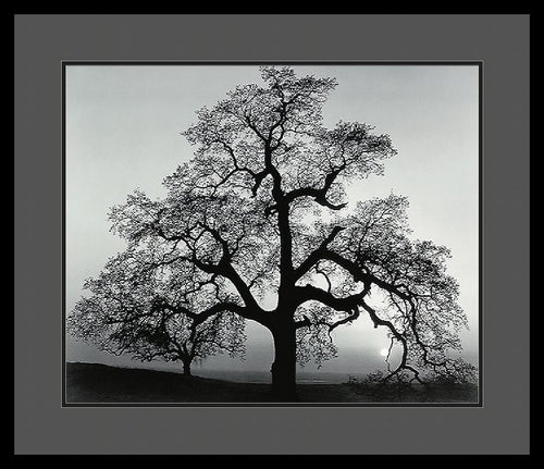 Amanti Art Ansel Adams Oak Tree Sunset City California 1962 Framed Print AA01392