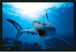 Amanti Art Shark Framed Print AA01478