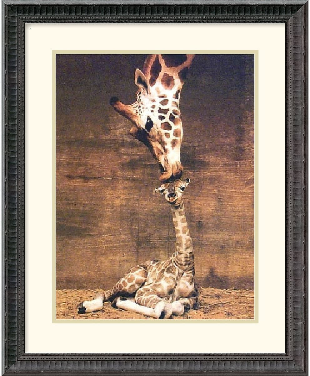 "18x22"" Ron DRaine Makulu Giraffe First Kiss Framed Print"