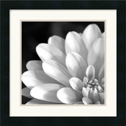 Amanti Art Radiating Petals Framed Print AA140466
