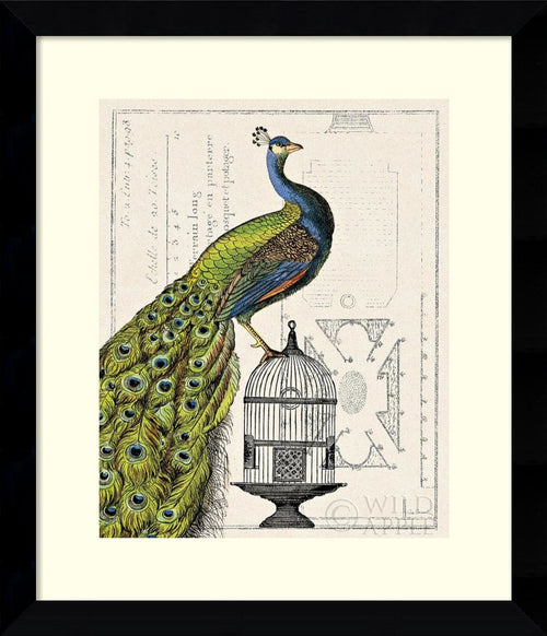 Amanti Art Peacock Birdcage I Framed Print by Sue Schlabach Arqadia Satin Black AA578919