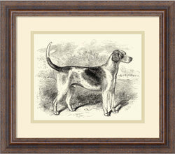 Foxhound Framed Art Print Distressed Wood