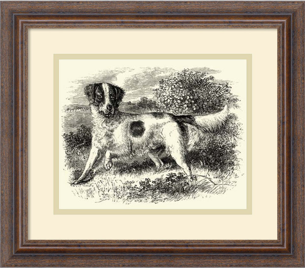 English Setter Framed Art Print Distressed Wood