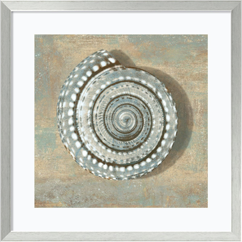 Caroline Kelly Aqua Seashell Framed Art Print Seashell