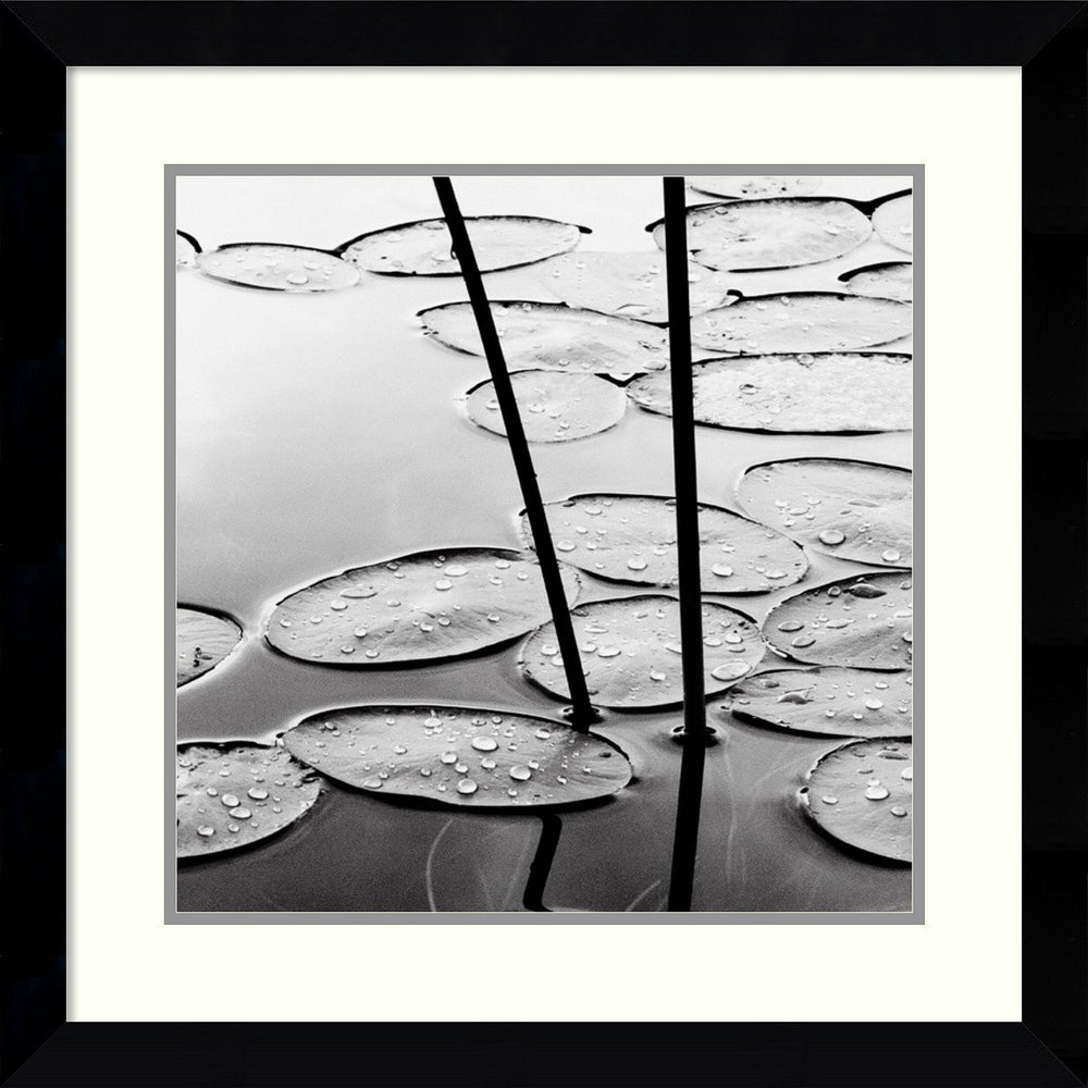 David Gray Lily Pads Dusk Framed Art Print Satin Black