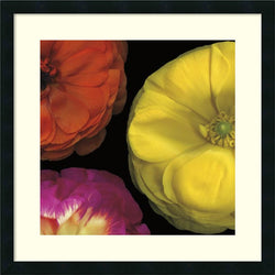 Pip Bloomfield Ranunculus II - Right Framed Art Print Satin Black